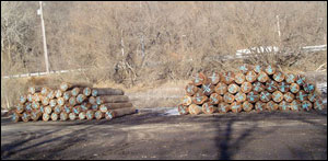 Midwest Walnut Prime Logs